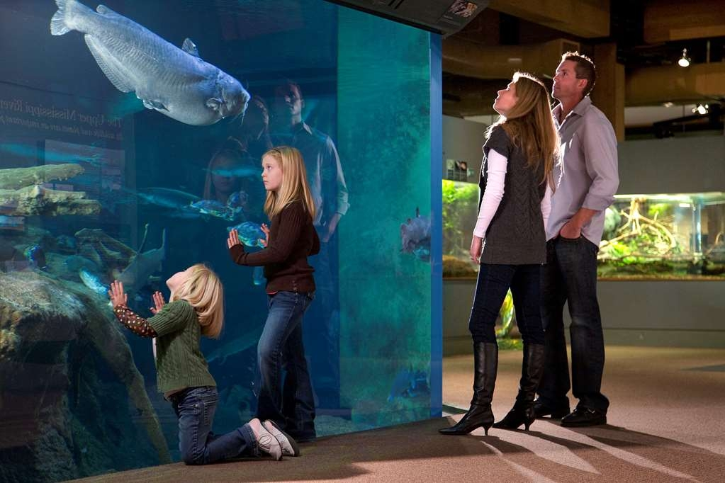Best Western Plus Dubuque Hotel & Conference Center - The National Mississippi River Museum & Aquarium is a must to see for all ages!