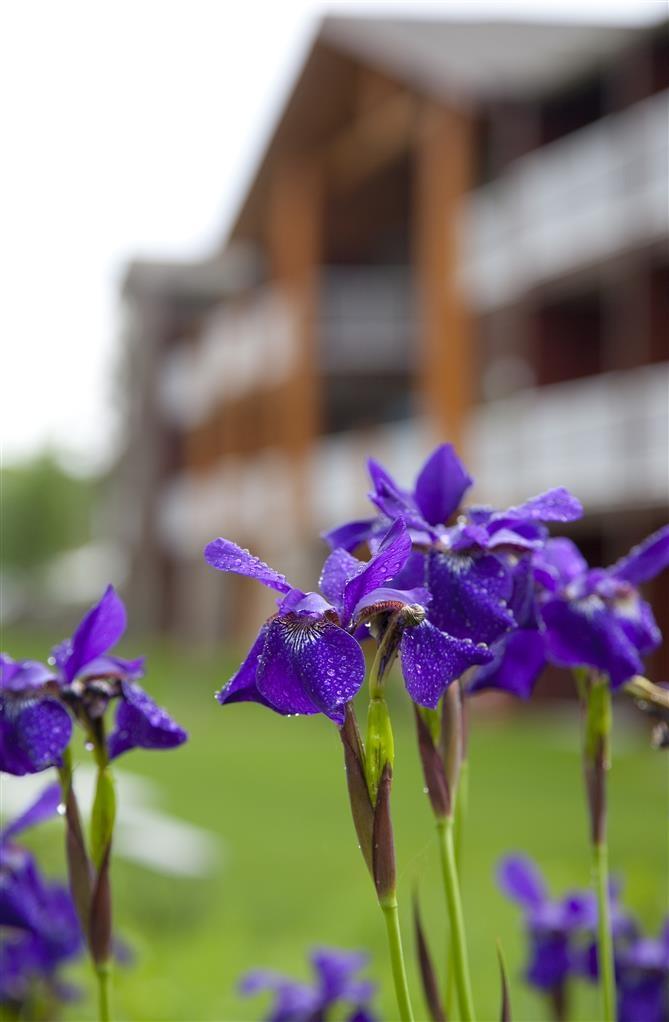 Best Western Premier The Lodge on Lake Detroit - Umweltfreundliche Regengärten und einheimische Pflanzen