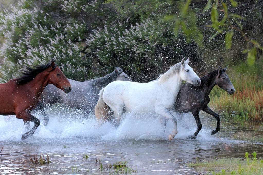 Best Western Airport Inn - Take a drive out to the Bush Highway . . . you just might see the Salt River Wild Horses!!