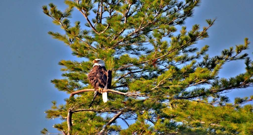 Best Western Saranac Lake - Come experience nature in Saranac Lake. We have amazing bird watching opportunities here in the area.