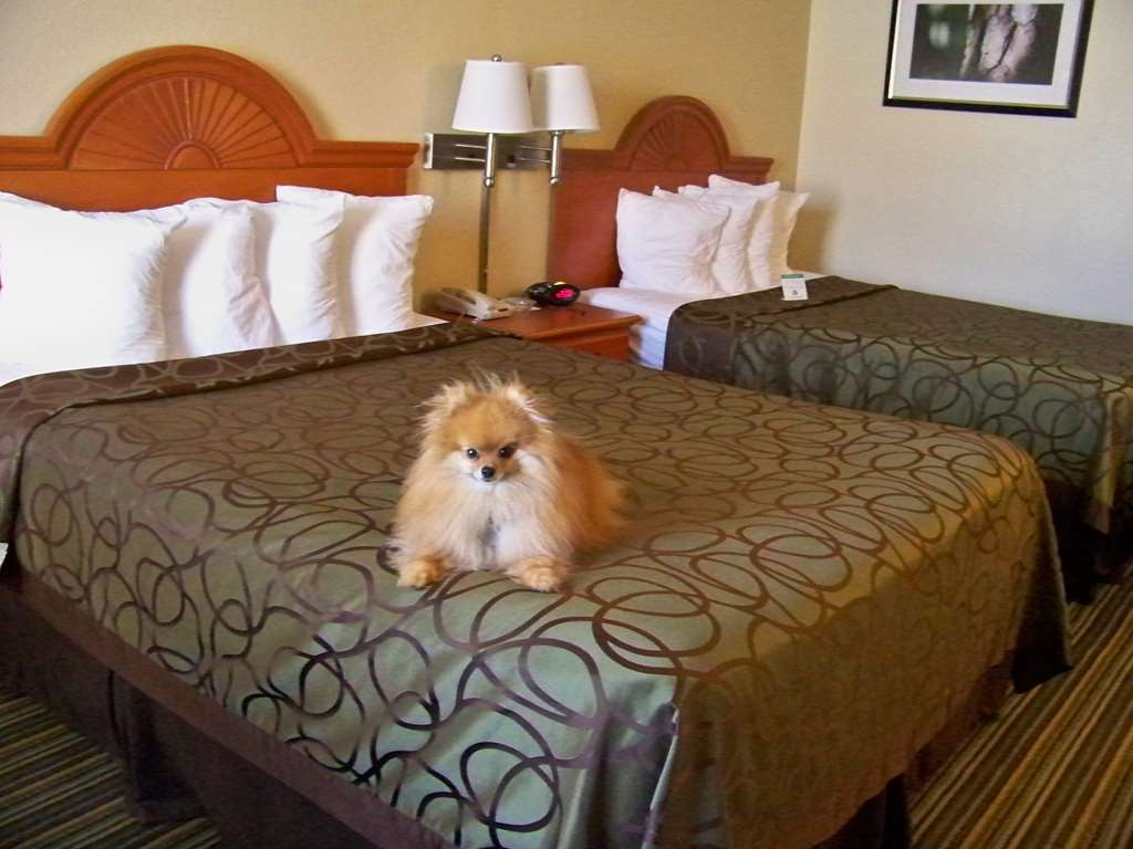 Best Western of Murphy - Queen Beds Non-smoking Pet Friendly