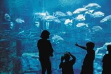 Best Western Dayton - Aquarium