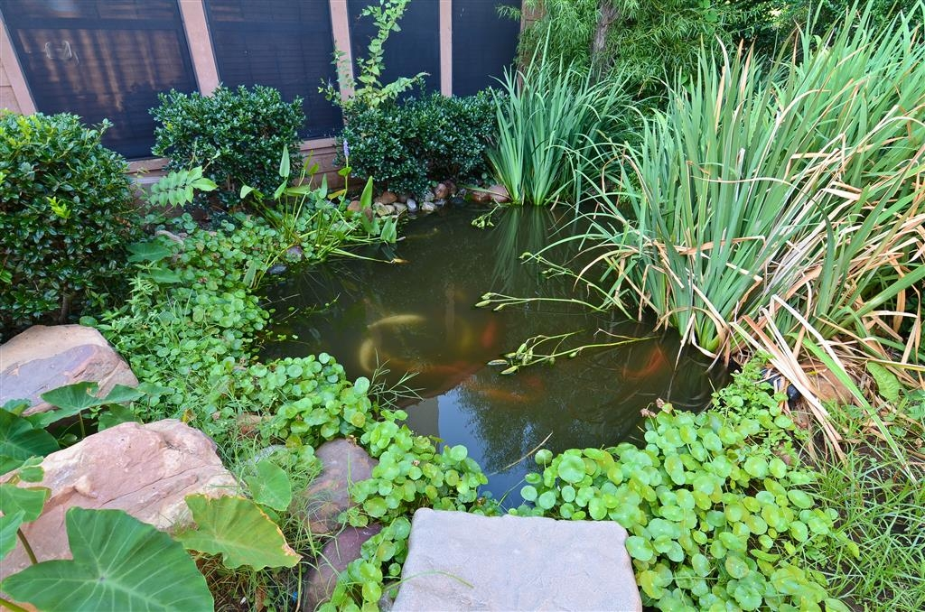 Best Western Dinosaur Valley Inn & Suites - Enjoy the serenity of the the hotel Koi pond. Make arrangements with the front desk for morning feeding of the fish.