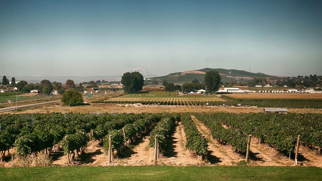 Best Western Plus Grapevine Inn - Enjoy the scenic view of the local vineyards right outside our lobby!