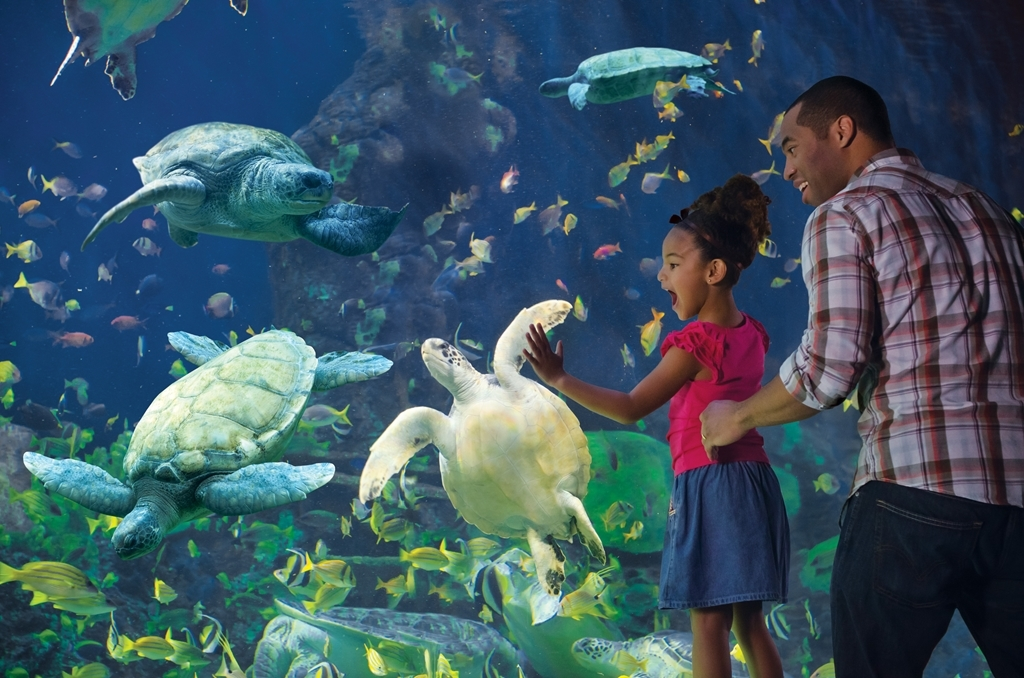 Best Western Plus Bayside Inn - SeaWorld® - Turtle Reef attraction.