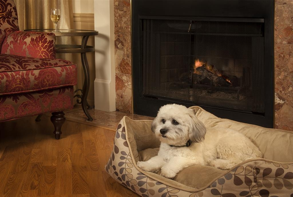Best Western Plus Victorian Inn - Bring the pets along. We are pet-friendly!