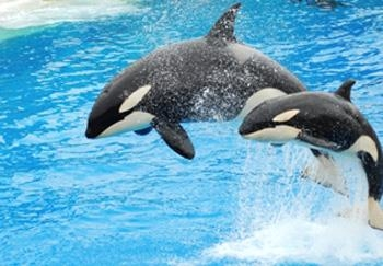 Best Western San Diego/Miramar Hotel - San Diego SeaWorld® features rides, shows, attractions and amazing animals.