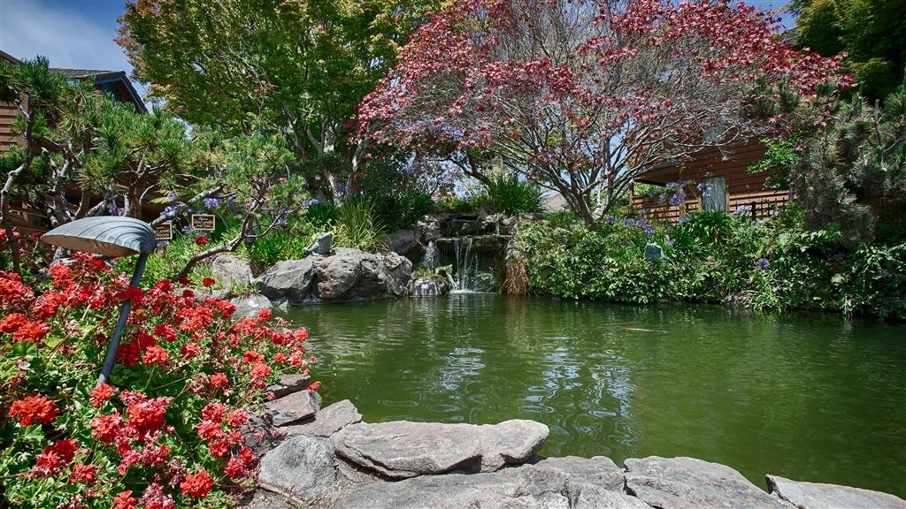 Best Western Seacliff Inn - Experience serenity while dining alongside our renowned Koi pond and cascading waterfall.