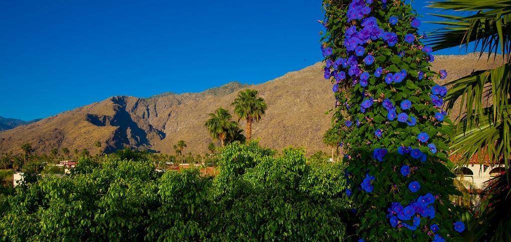 Best Western Plus Las Brisas Hotel - Mountain View