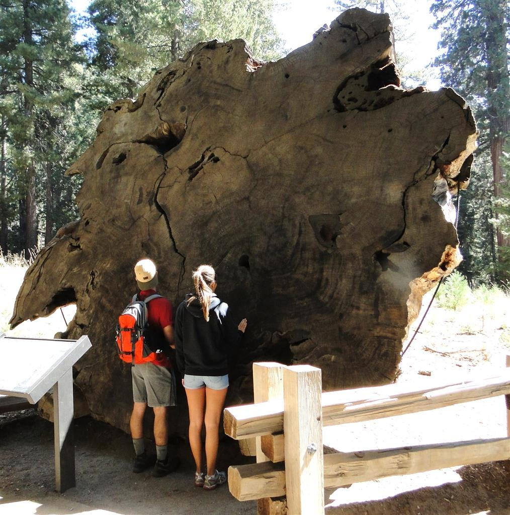 Best Western Americana - Take a visit to the Sequoia Park.