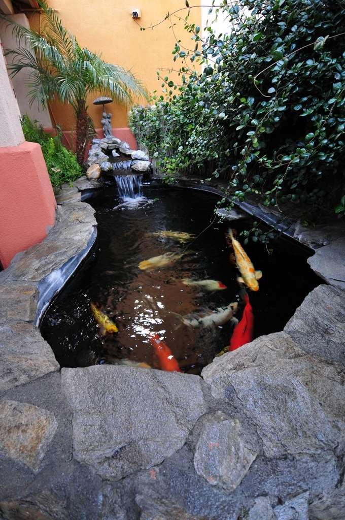 Best Western Antelope Inn & Suites - KOI POND