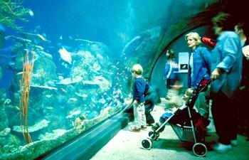 Best Western Denver Southwest - The Denver Aquarium offers an enjoyable and educational day for all!