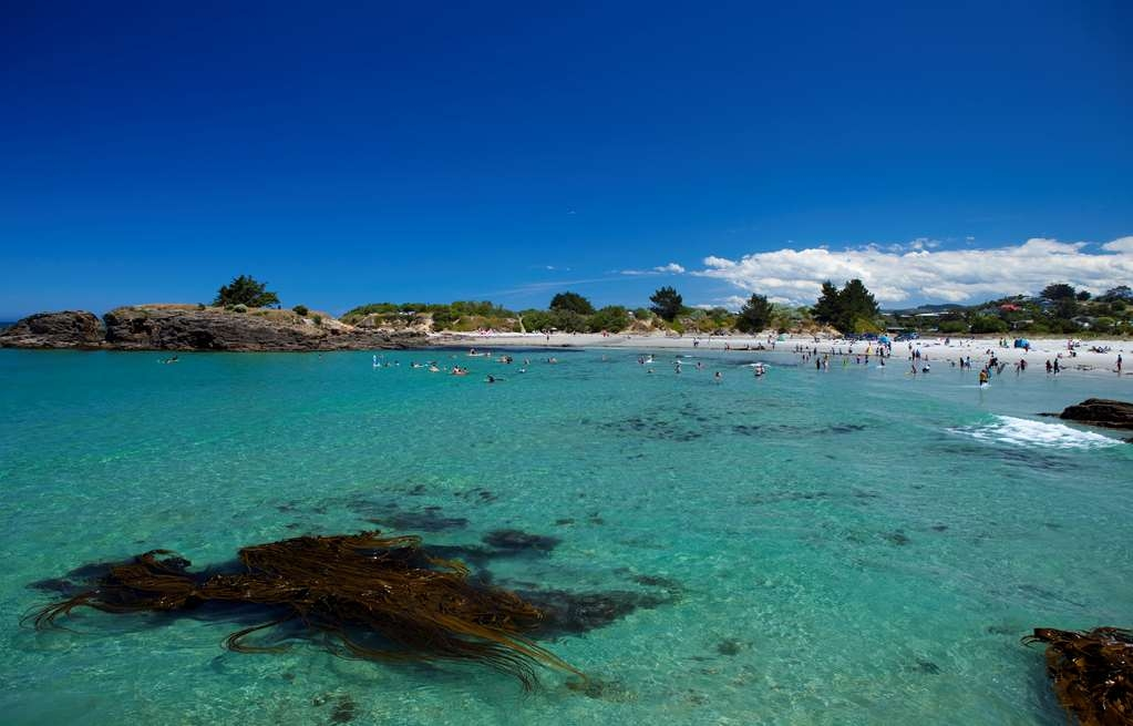 Best Western Dunedin - Dunedin Brighton Beach