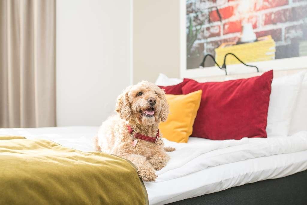 Best Western Hotel Svava - Vissa rum ok med hund/katt