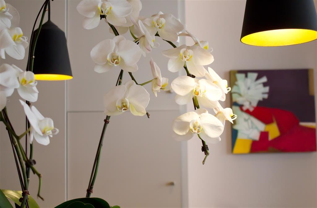 Best Western Jardin De Cluny - Lobby